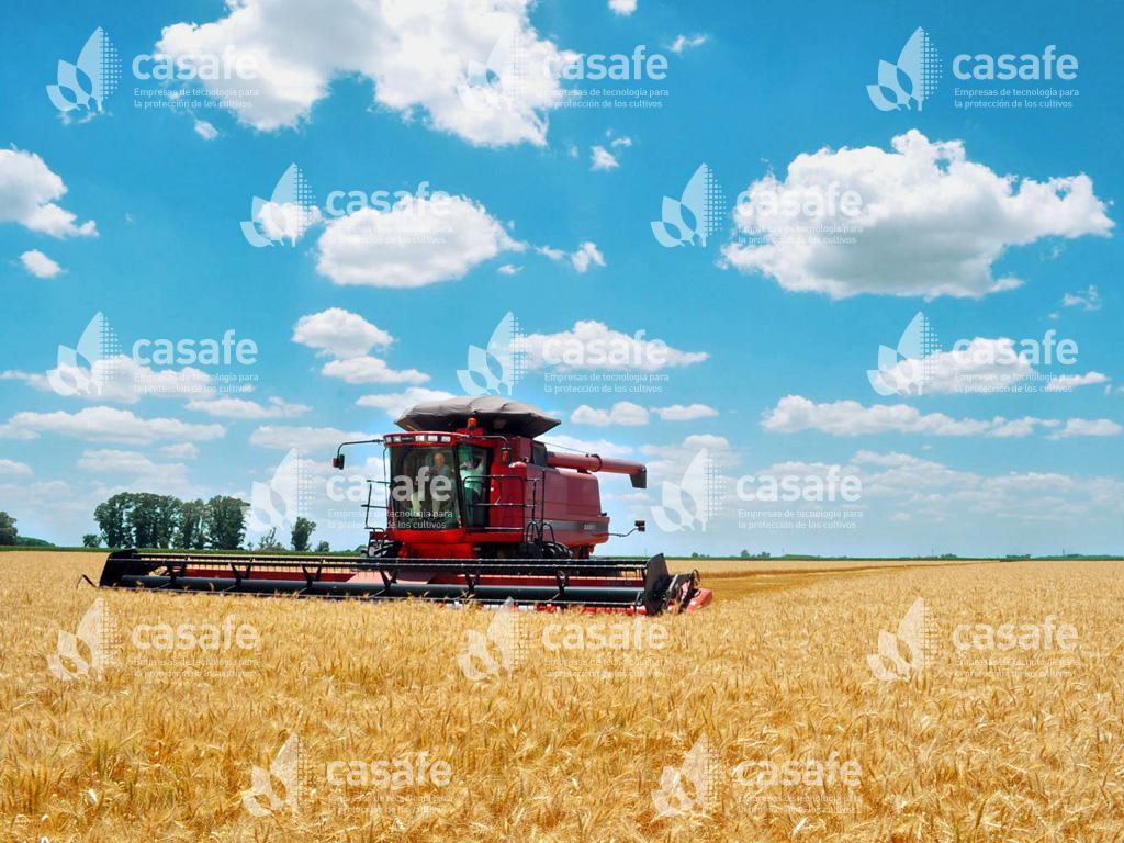 imagen-casafe-cosechadora1 agricultura sustentable
