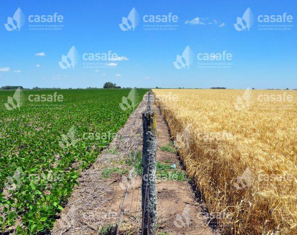 Cultivos – Trigo y Soja