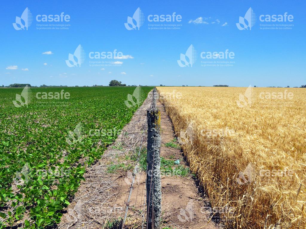 imagen-casafe-cultivos1 uso seguro de agroquimicos