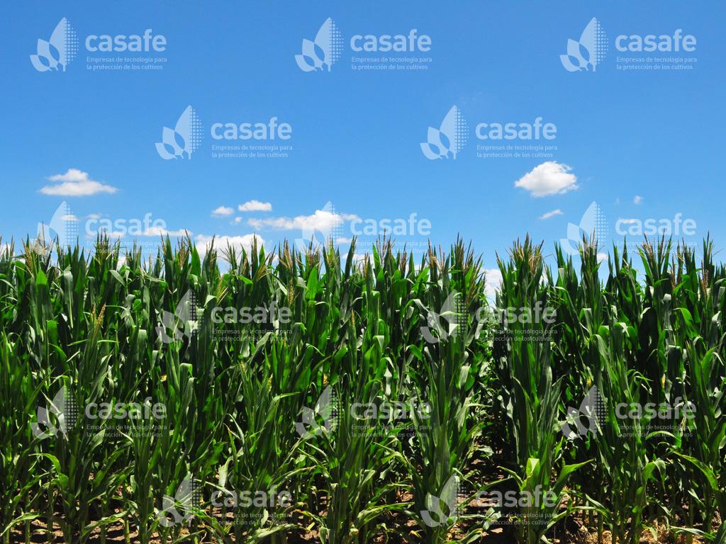 cultivos-agricultura sustentable