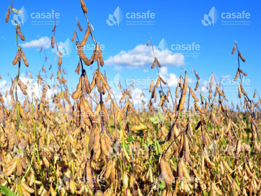 produccion-alimentos-sanos agroquimicos y alimentos