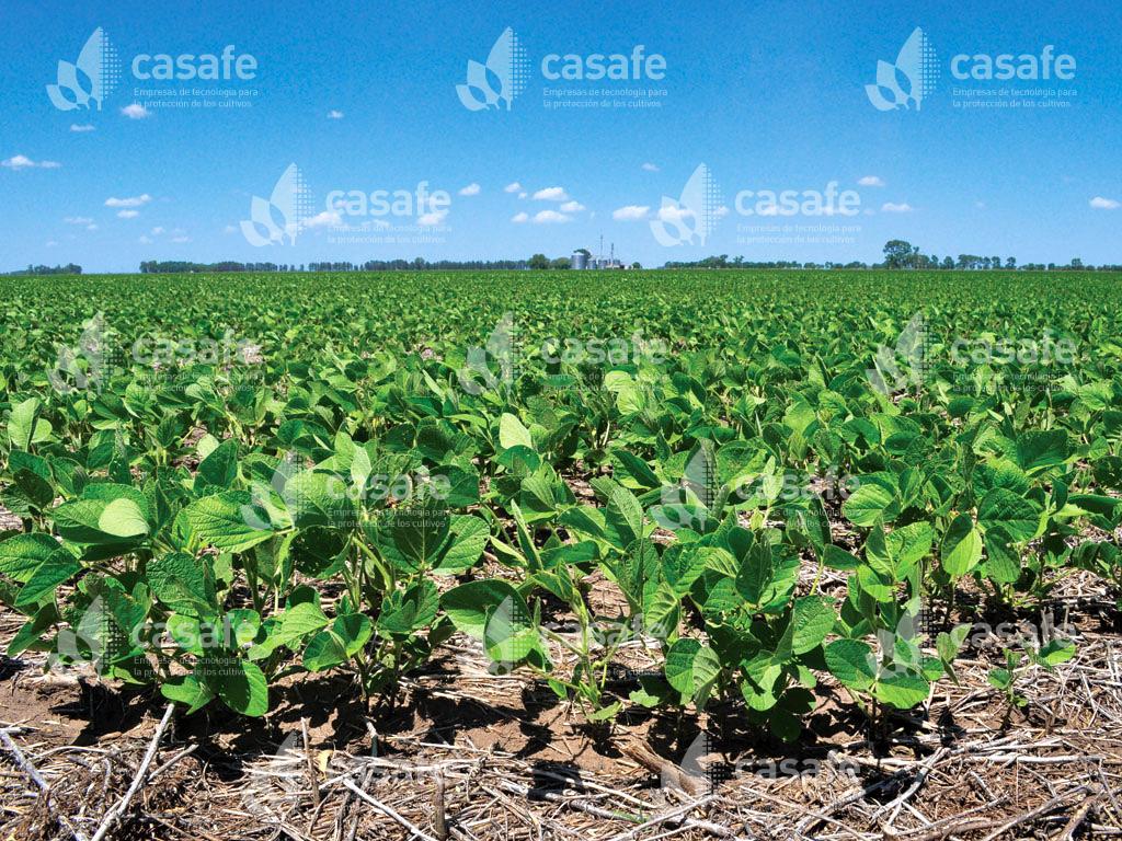 campo-cultivado agroquimicos y alimentos