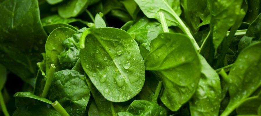 Cuidados en verduras de hojas