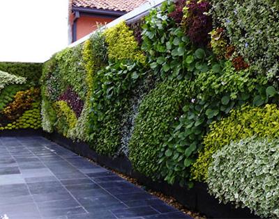Tengo un jard n en mi pared casafe for Jardines de pared para interiores