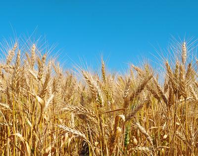 Antes y Después de los productos fitosanitarios