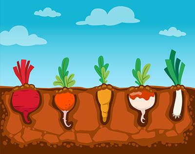 Mitos y verdades de los agroquímicos o productos para la protección de cultivos