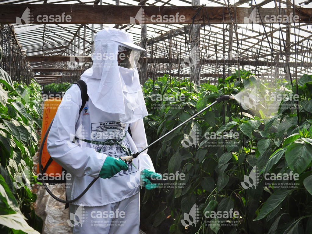 imagen casafe aplicacion de agroquimicos con mochila glifosato
