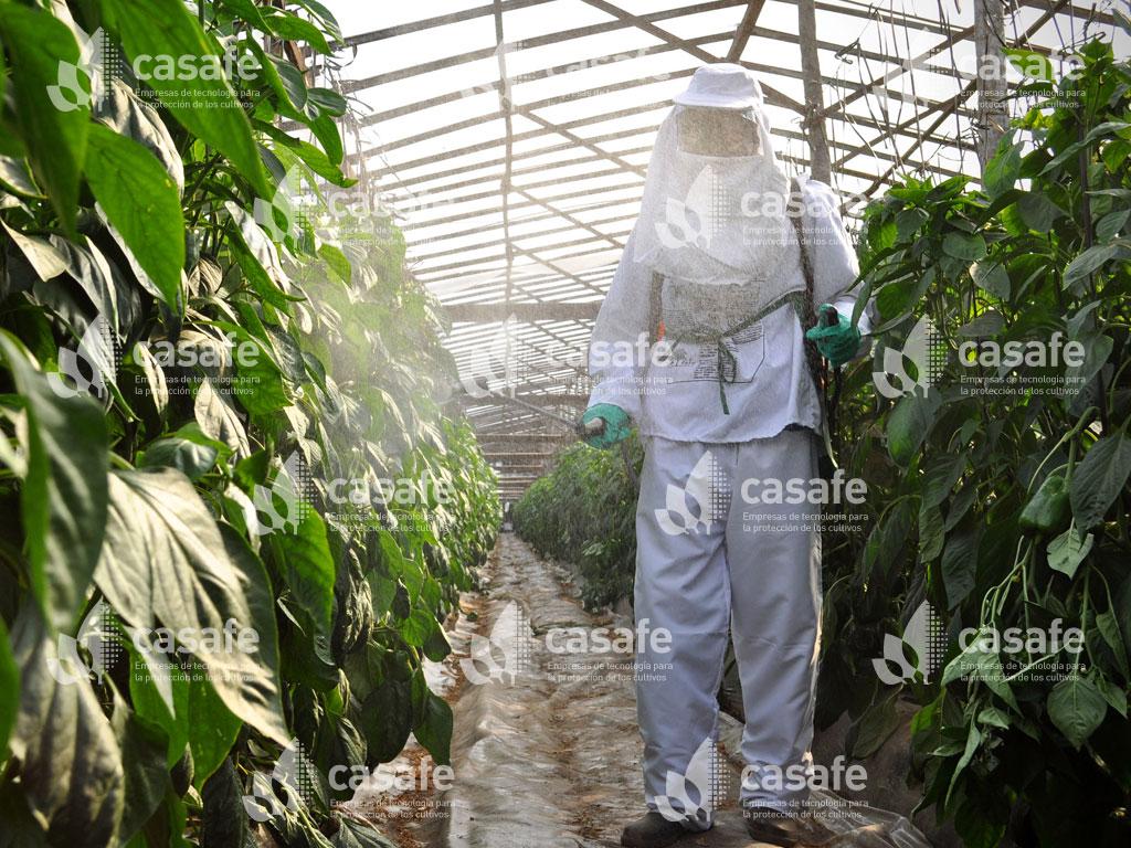 imagen casafe aplicacion de fitosanitarios con mochila glifosato