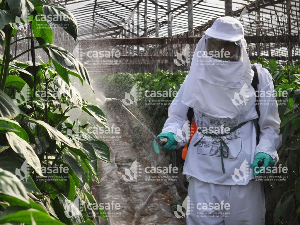 imagen casafe pulverizacion de fitosanitarios con mochila glifosato