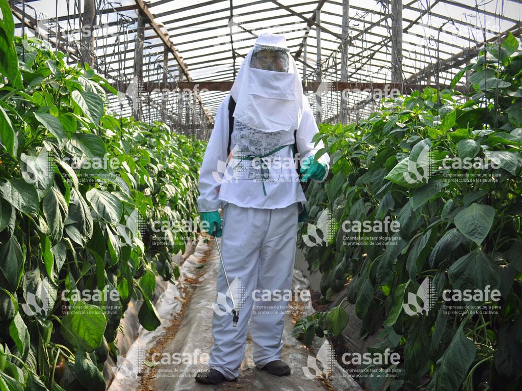 imagen casafe pulverizacion de agroquimicos con mochila glifosato