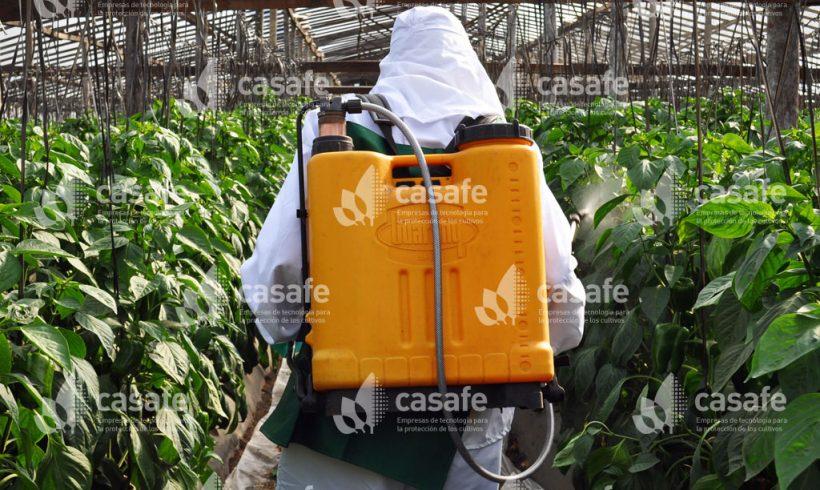 Pulverización con mochila 5