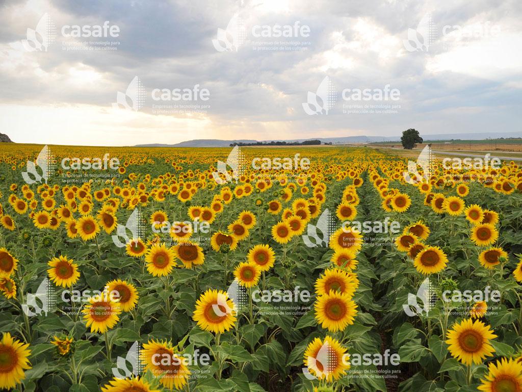 imagen-casafe-cultivos18