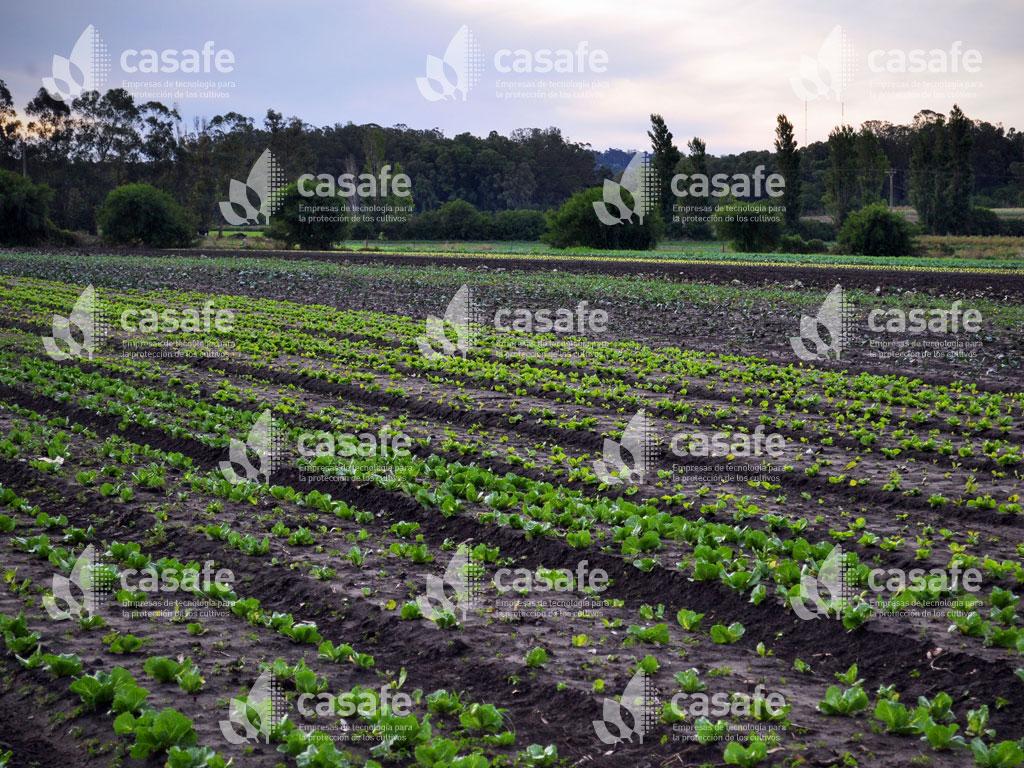 fitosanitarios y cultivos glifosato