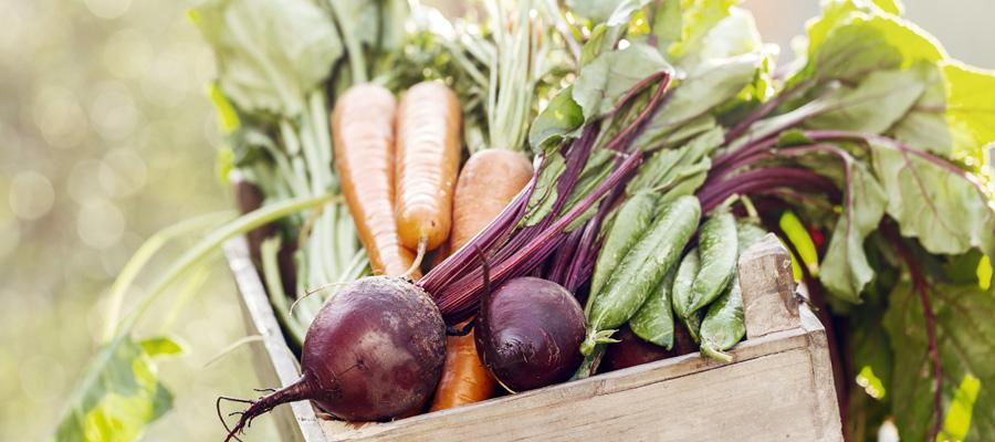 salud y agroquimicos casafe