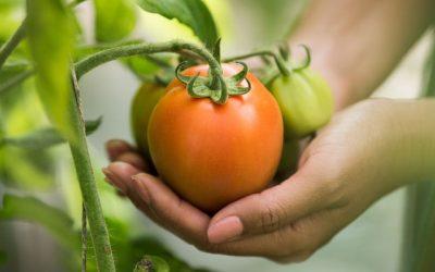¿Cómo implementar las BPA en la producción hortícola?