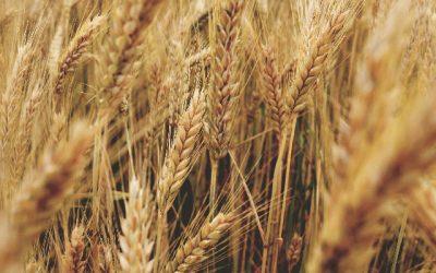 Un mes para celebrar la Agricultura Nacional