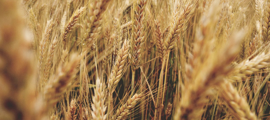 Noticias-Casafe-Editorial-Un-mes-para-celebrar-la-agricultura-nacional