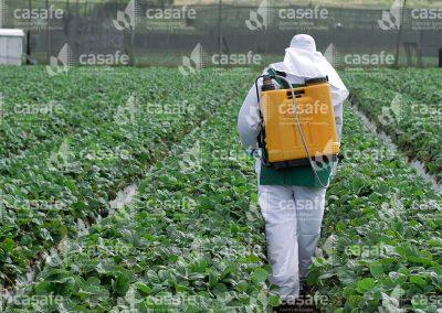 Aplicador con mochila pulverizadora en campo de frutillas