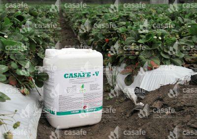Envases de productos fitosanitarios en cultivo de frutillas