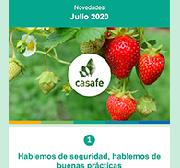 newsletter casafe julio 2020