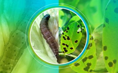Una nueva herramienta para identificar resistencias a insecticidas y fungicidas ¡Sumate a esta red!