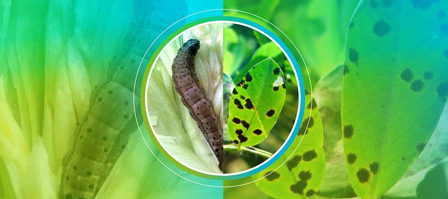 Una nueva herramienta para identificar resistencias a insecticidas y fungicidas