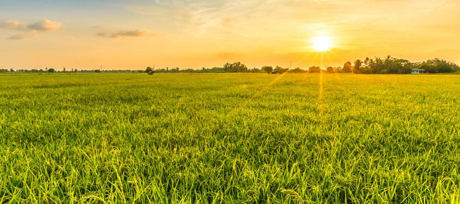 La agricultura responsable preserva la biodiversidad