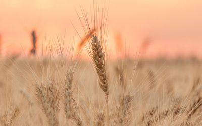 La llave de la producción de alimentos